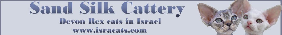 __Sand Silk__ израильский питомник девон рексов,сиамских  и балинезийских кошек