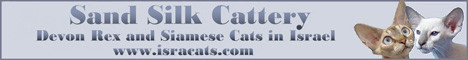 __Sand Silk__ The Israel Cattery Of Devon Rex, Siamese and Balinese Cats